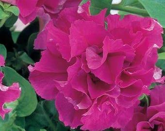 Cascade PINK PETUNIA Seeds - Huge, Double Blooms, High Germination, Fresh (30 - 35 seeds)