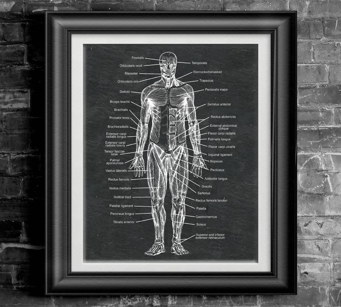 Menschliche anatomische Platte Poster menschlichen Anatomie | Etsy