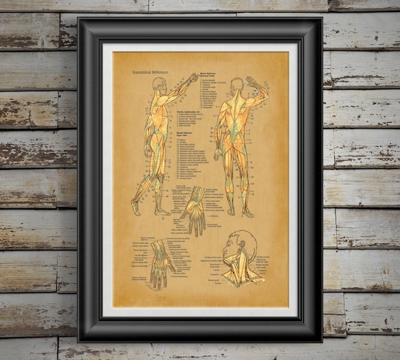 Human Anatomy Human Muscle Chart Medical Student Gift For Etsy