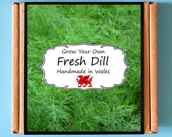 Grow Your Own Dill Herb Kit - Indoor Gardening Gift