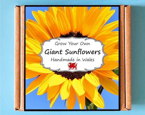 Grow Your Own Giant Sunflower Plant Kit - Indoor Gardening Gift