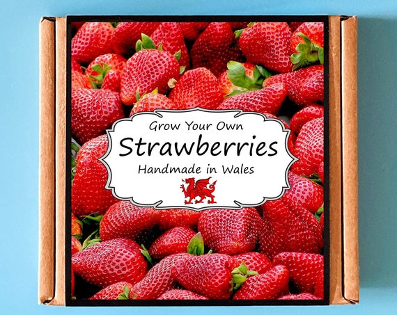 Grow Your Own Strawberry Plant Kit - Indoor Gardening Gift
