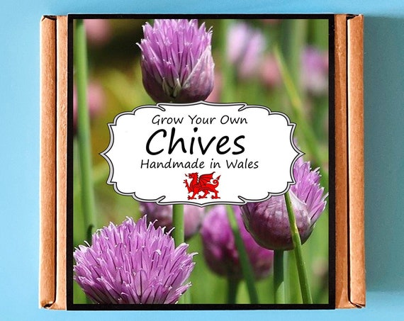 Grow Your Own Chives Herb Plant Kit - Indoor Gardening Gift