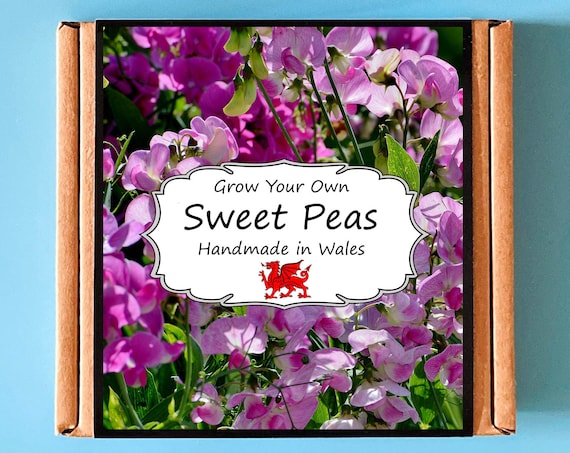 Grow Your Own Sweet Pea Plant Kit - Indoor Gardening Gift