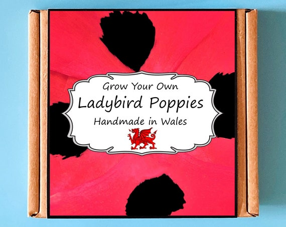 Grow Your Own Ladybird Poppy Plant Kit - Indoor Gardening Gift