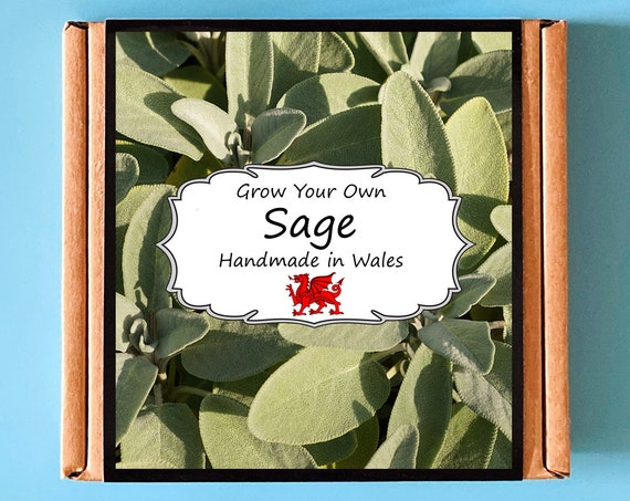 Grow Your Own Sage Herb Plant Kit - Indoor Gardening Gift