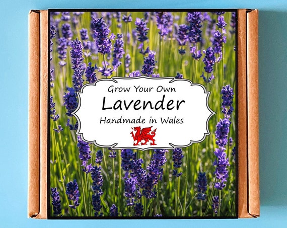Grow Your Own Lavender Plant Kit - Indoor Gardening Gift