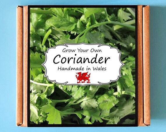 Grow Your Own Coriander Herb Kit - Indoor Gardening Gift