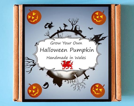 Grow Your Own Halloween Pumpkin Plant Kit - Indoor Gardening Gift