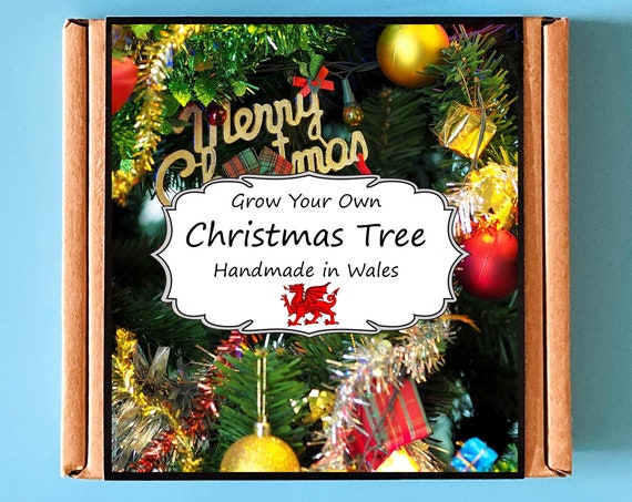 Grow Your Own Christmas Tree Kit - Indoor Gardening Gift