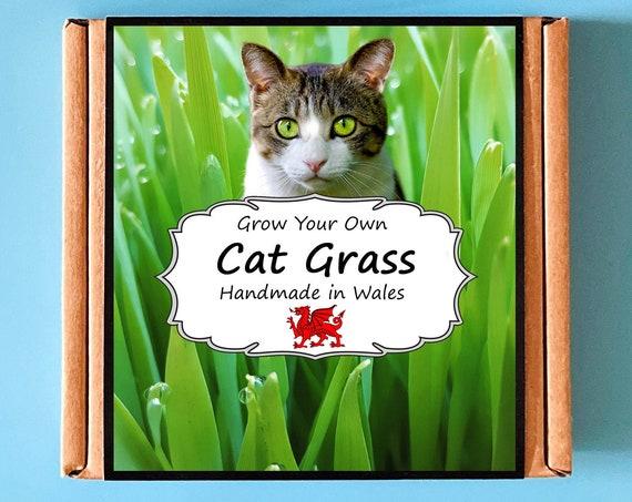 Grow Your Own Cat Grass Plant Kit - Indoor Gardening Cat Lover Gift