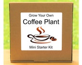 Grow Your Own Fresh Coffee Plant Growing Kit Complete beginner friendly indoor gardening starter kit Gift for men, women or children