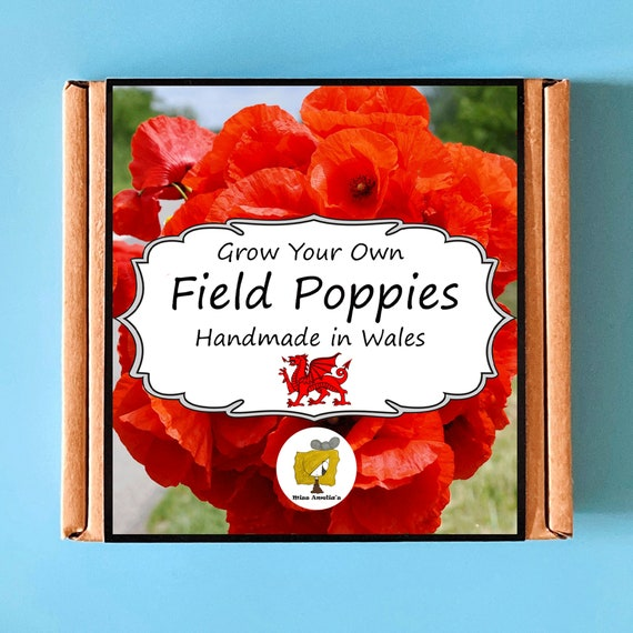 Grow Your Own Flanders Field Remembrance Poppy Kit. Indoor Gardening Gift. Perfect Birthday Gift For Adults, Children, Kids. Planting Kit.