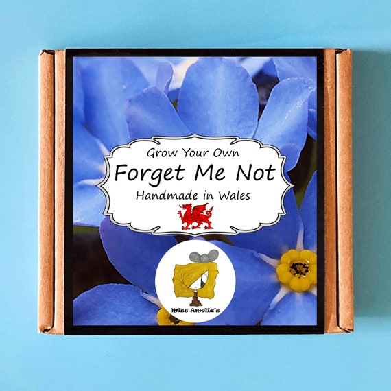 Grow Your Own Forget Me Not Plant Kit. Indoor Gardening Gift. Perfect Birthday Gift For Adults, Children, Kids. Flowers Planting Kit.