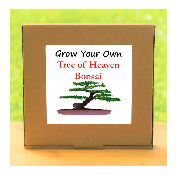 Gardening Gift - Grow Your Own Tree of Heaven Bonsai Kit