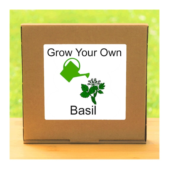 Windowsill Herb Garden - Grow Your Own Basil Plant Growing Kit – Complete beginner friendly indoor gardening starter kit