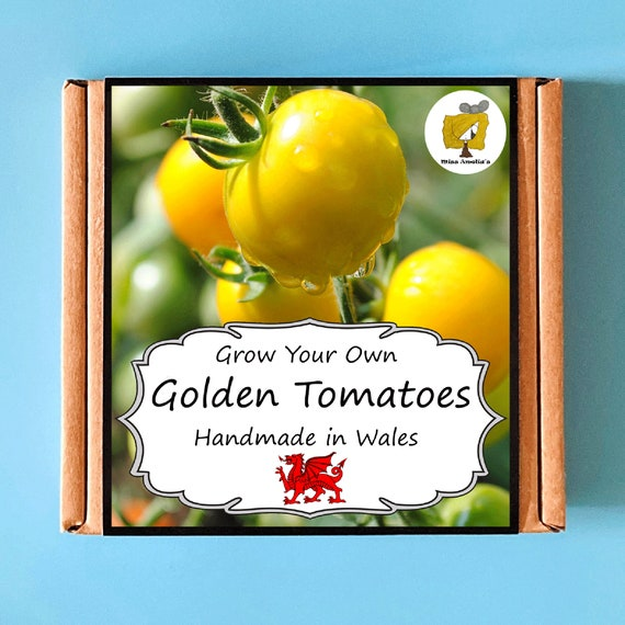 Grow Your Own Golden Sunrise Yellow Tomato Plant Kit. Indoor Gardening Gift. Perfect Birthday Gift For Adults, Children, Kids. Fruit Kit.