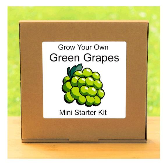 Grow Your Own Green Grape Vine Tree Growing Kit – Complete beginner friendly indoor gardening starter kit – Gift for men, women or children