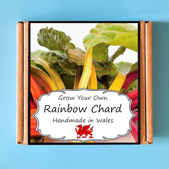 Grow Your Own Rainbow Chard Plant Kit - indoor gardening gift for adults or children - perfect birthday gift - grow your own vegetables