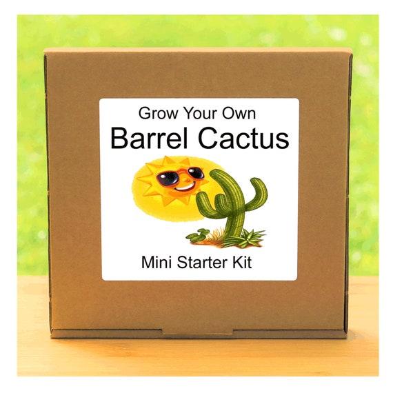 Grow Your Own Prickly Barrel Cactus Plant Growing Kit – Beginner friendly indoor gardening starter kit