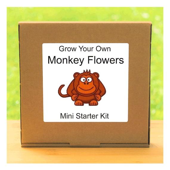 Grow Your Own Monkey Flowers Growing Kit – Complete beginner friendly indoor gardening Mimulus starter kit – Gift for men, women or children