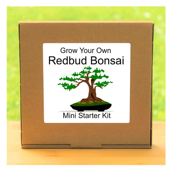 Grow Your Own American Redbud Bonsai Tree – Complete beginner friendly indoor gardening starter kit – Gift for men, women or children