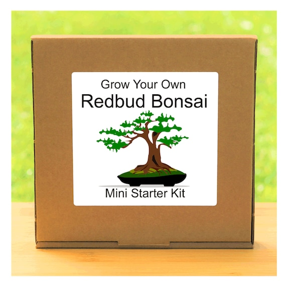 Grow Your Own American Redbud Bonsai Tree Growing Kit – Beginner friendly indoor gardening starter kit – Gift for men, women or children