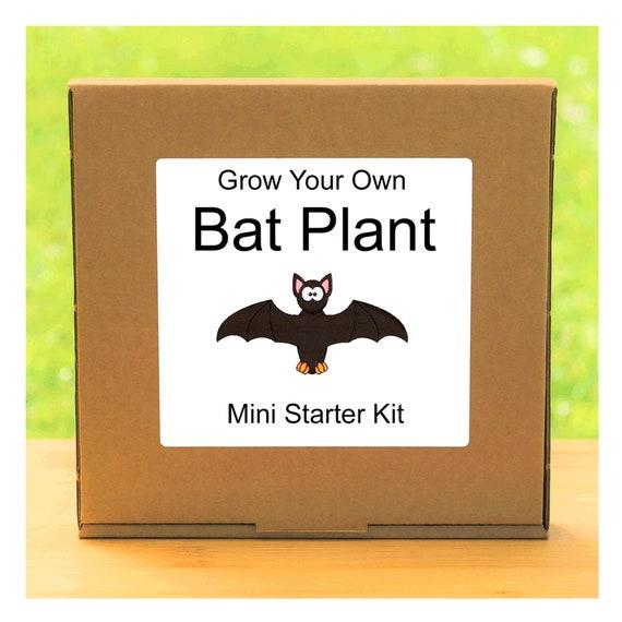 Grow Your Own Tacca Bat Plant Growing Kit – Beginner friendly complete starter kit - indoor gardening gift for men, women or children