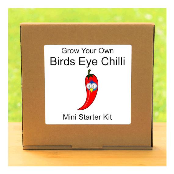 Grow Your Own Birds Eye Hot Chilli Plant Growing Kit – Beginner friendly indoor gardening starter kit – Gift for men, women or children