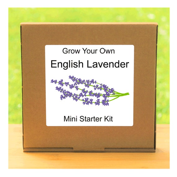 Grow Your Own English Lavender Plant Growing Kit – Complete beginner friendly indoor gardening starter kit – Gift for men, women or children