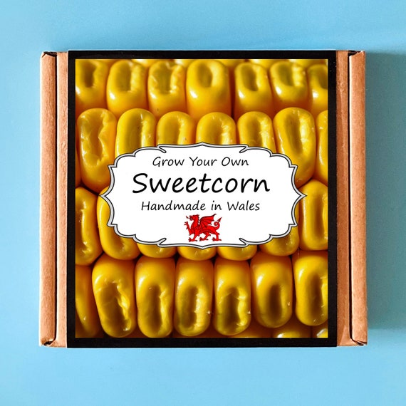 Grow Your Own Sweetcorn Plant Kit - indoor gardening gift for adults or children - perfect birthday gift - grow your own vegetables
