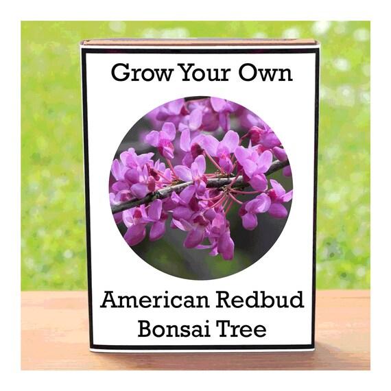 American Redbud Bonsai Tree Growing Kit – Indoor Grow Your Own Planting Kit