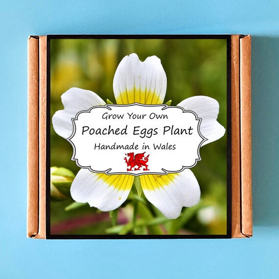 Grow Your Own Poached Eggs Plant Kit - indoor gardening gift for adults or children - perfect birthday gift