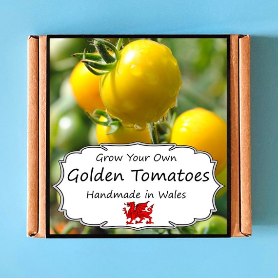 Grow Your Own Golden Sunrise Yellow Tomato Plant Kit - indoor gardening gift for adults or children - perfect birthday gift - salad kit