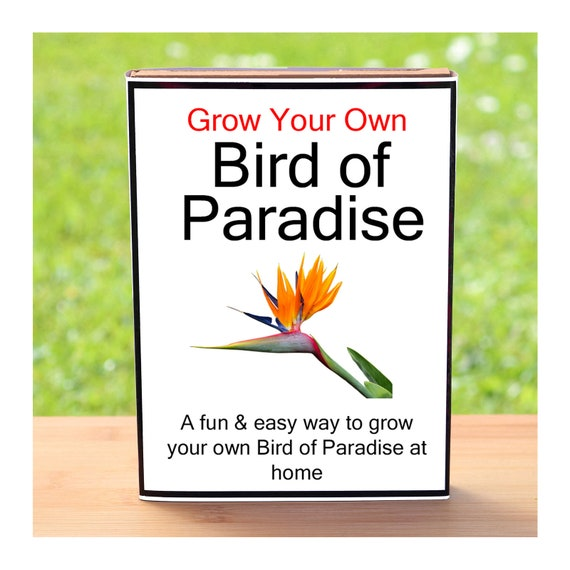 Gardening Gift For Men Or Women Who Have Everything - Grow Your Own Bird Of Paradise
