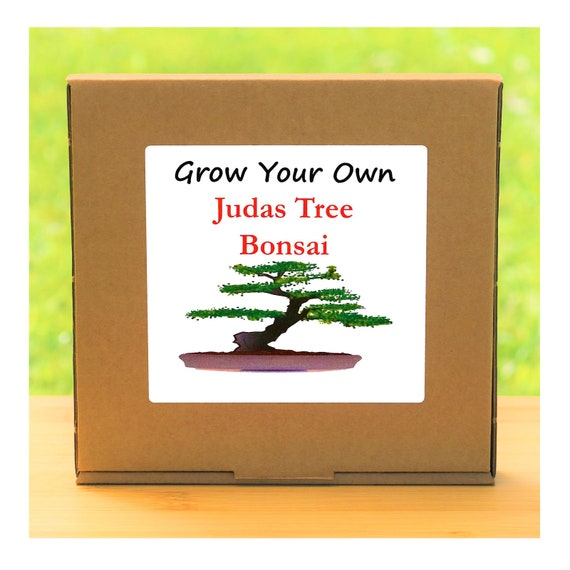 Gardening Gift - Grow Your Own Judas Bonsai Tree Kit