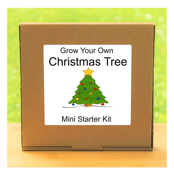 Grow Your Own Christmas Tree Growing Kit – Complete beginner friendly indoor gardening starter kit – Gift for men, women or children