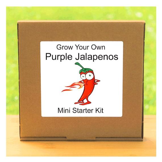 Grow Your Own Purple Jalapeno chilli plant growing kit – Beginner friendly indoor gardening starter kit – Gift for men, women or children