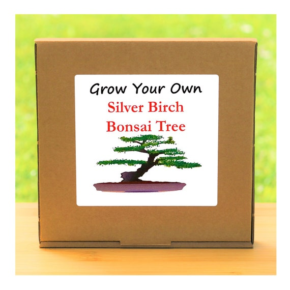 Gardening Gift - Grow Your Own Silver Birch Bonsai Tree Kit