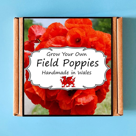 Grow Your Own Flanders Field Remembrance Poppy Kit - indoor gardening gift for adults or children - perfect birthday gift