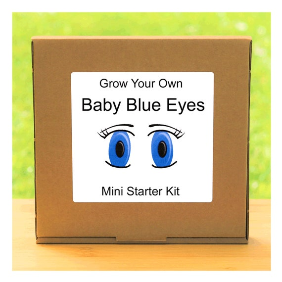 Grow Your Own Baby Blue Eyes Flowers Growing Kit – Complete beginner friendly indoor gardening starter kit – Gift for men, women or children