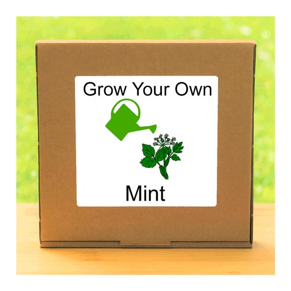Windowsill Herb Garden - Grow Your Own Mint Plant Growing Kit – Complete beginner friendly indoor gardening starter kit