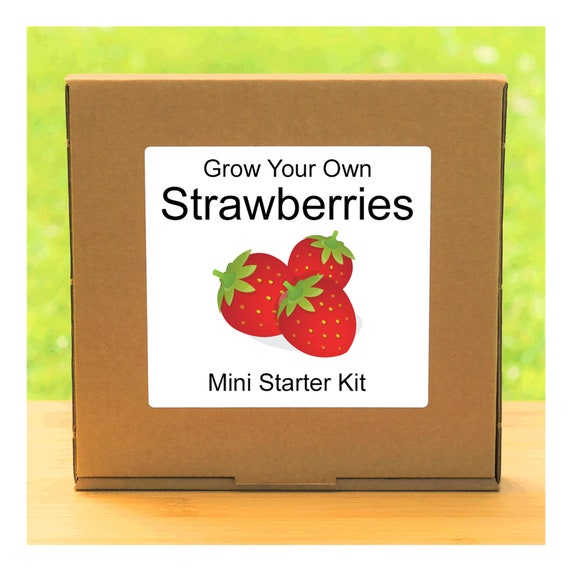 Grow Your Own Alpine Strawberry Plant Growing Kit – Beginner friendly indoor gardening starter kit – Gift for men, women or children