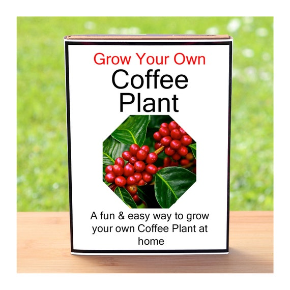 Gardening Gift For Men Or Women Who Have Everything - Grow Your Own Coffee Plant