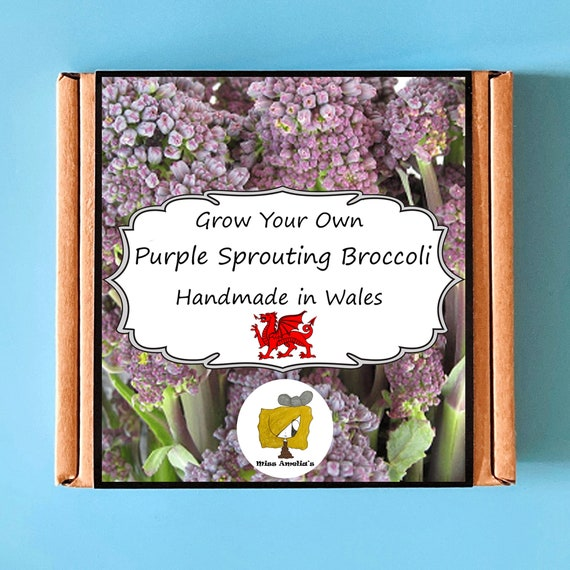 Grow Your Own Purple Sprouting Broccoli Plant Kit. Indoor Gardening Gift. Perfect Birthday Gift For Adults, Children, Kids. Vegetable Kit.
