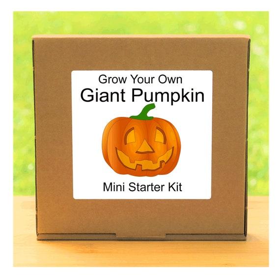 Grow Your Own Giant Halloween Pumpkin Plant Growing Kit – Beginner friendly indoor gardening starter kit