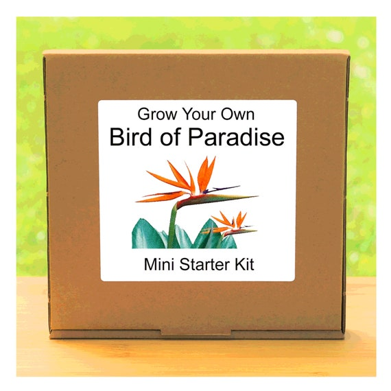 Grow Your Own Bird of Paradise Plant Growing Kit – Complete beginner friendly indoor gardening starter kit – Gift for men, women or children