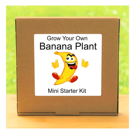 Grow Your Own Edible Banana Tree Growing Kit – Complete beginner friendly indoor gardening starter kit – Gift for men, women or children