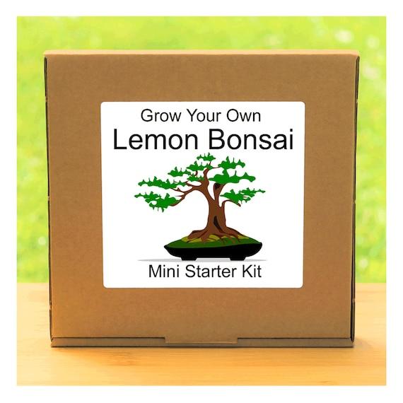 Grow Your Own Lemon Bonsai Tree Growing Kit – Complete beginner friendly indoor gardening starter kit – Gift for men, women or children