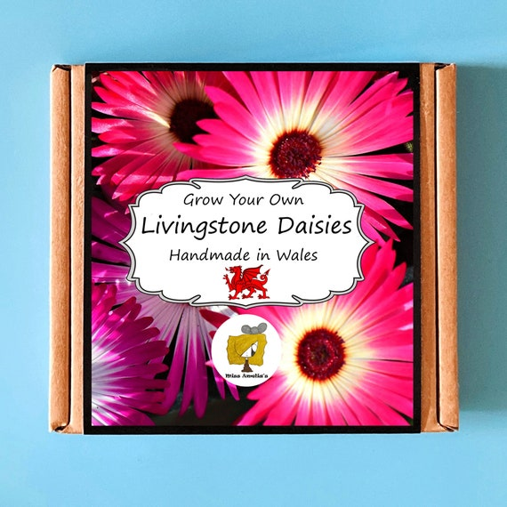 Grow Your Own Livingstone Daisy Plant Kit. Indoor Gardening Gift. Perfect Birthday Gift For Adults, Children, Kids. Flowers Planting Kit.